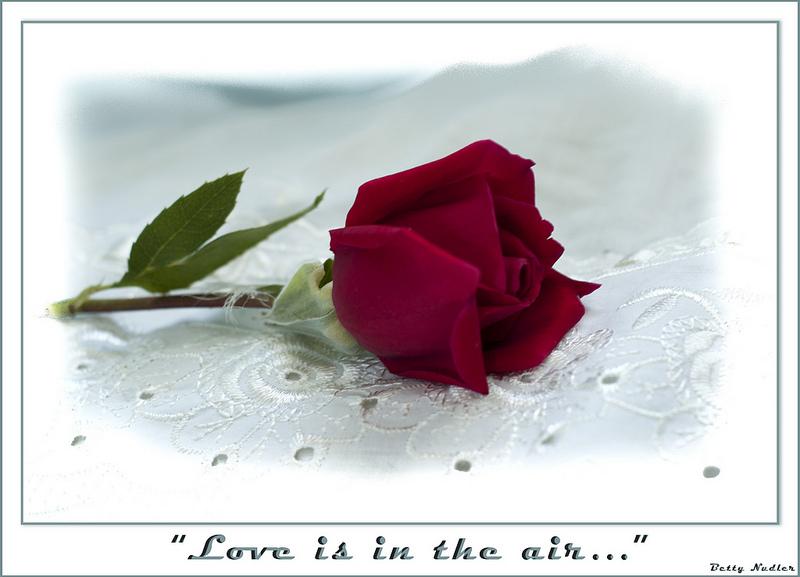 rose-1