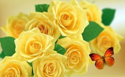 Photo credit: 'Yellow rose' - Foter.com / CCO
