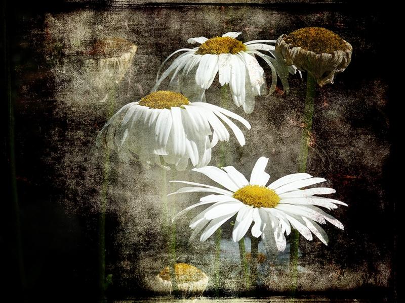sbd-10-daisies-1