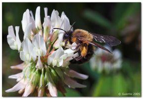 Photo credit: Furry Bee Guerito via Foter.com / CC BY-NC Original image URL: https://www.flickr.com/photos/guerito/20042369/