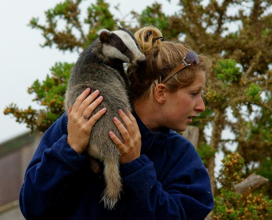 badger 15