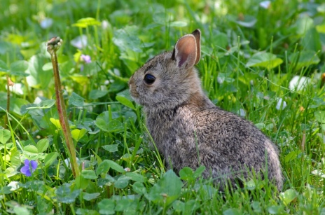 Leveret Johnath via Foter.com / CC BY-SA Original image URL: https://www.flickr.com/photos/johnath/5747814500/
