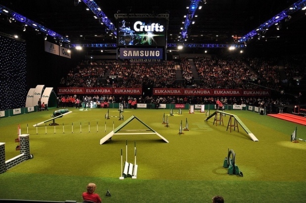 crufts - image courtesy of www.petful.com